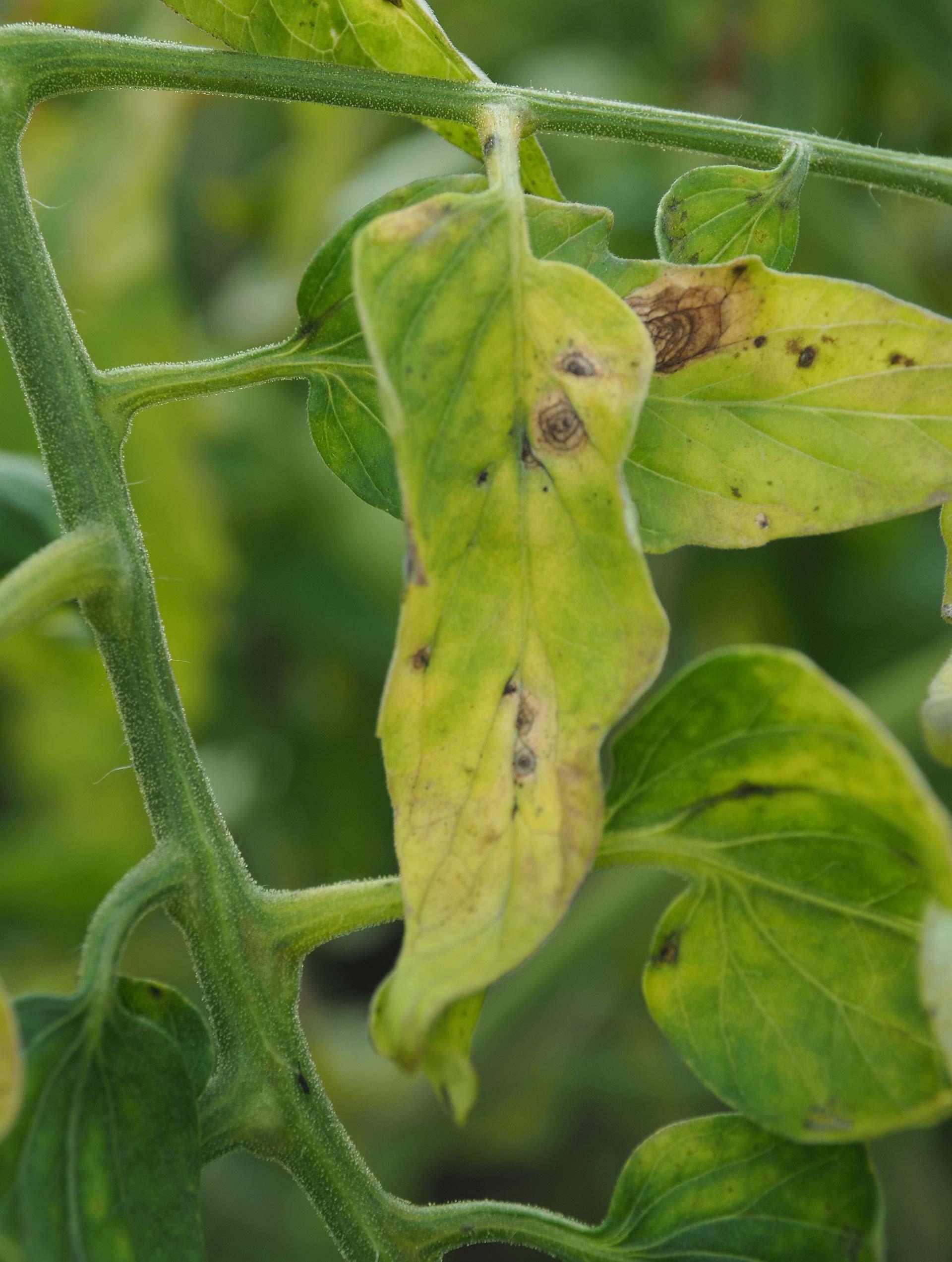 Defensa de plagas y enfermedades en agricultura ecológica